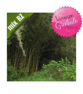Chusquea Culeou, bambou chilien