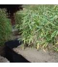 Barrière Rootblock qualité extra sasa tsuboiana