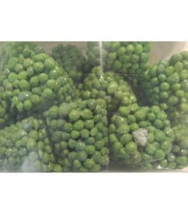 best professional green plant fertilizer