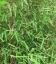 Special haie nitida jiuzhaigou sp 1