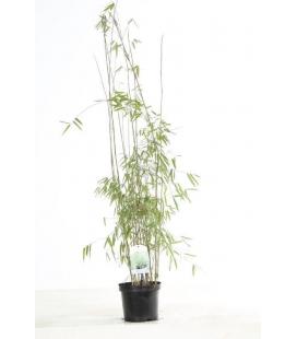 Special haie jiuzhaigou sp 1