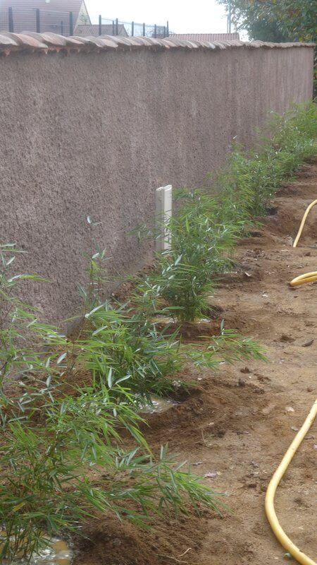 Haie Fargesia Robusta Campbell posté par Brigitte B. le 10 Novembre 2015, fargesia robusta campbell en pot de 5 litres hauteur téhoriques 40-60cm production française au label plante bleue