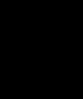 Schema représentant le port à l'age adulte du bambou non-traçant fargesia Obelisk