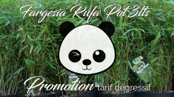 Promotion Bambou fargesia Rufa et Asian wonder