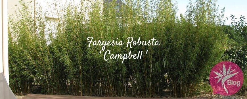 Bambou fargesia taille