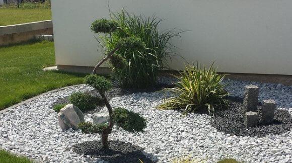 Arbre à Nuage Bleu Juniperus